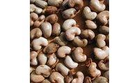180px-India_Goa_cashewuts_list.jpg