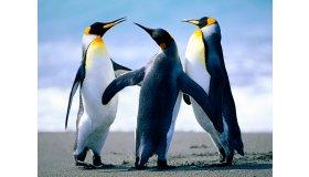 Penguins_grid.jpg